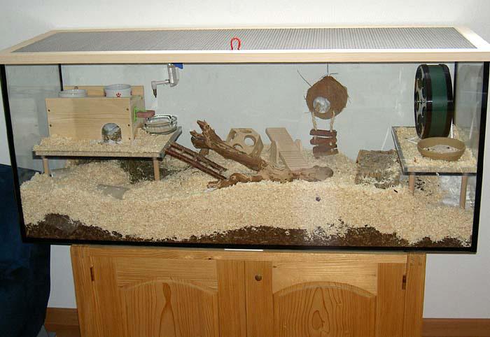 was tun wenn der hamster entlaufen ist. Black Bedroom Furniture Sets. Home Design Ideas