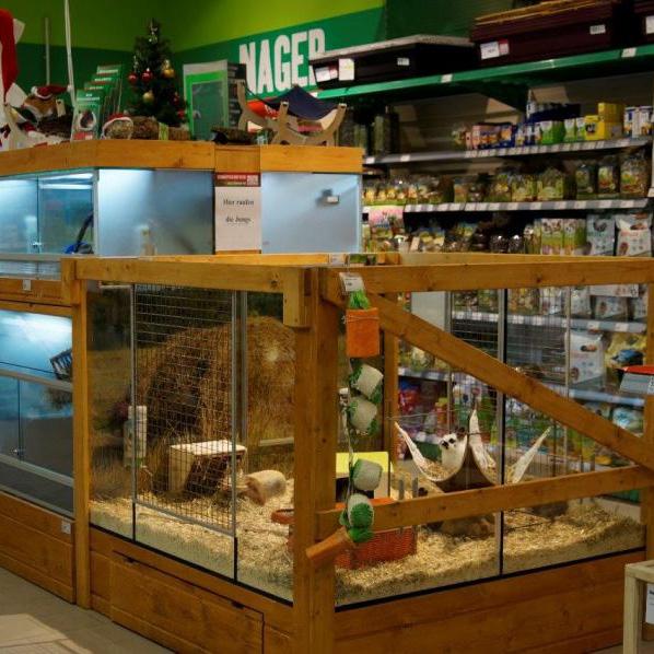Hamster Kaufen Zoohandlung