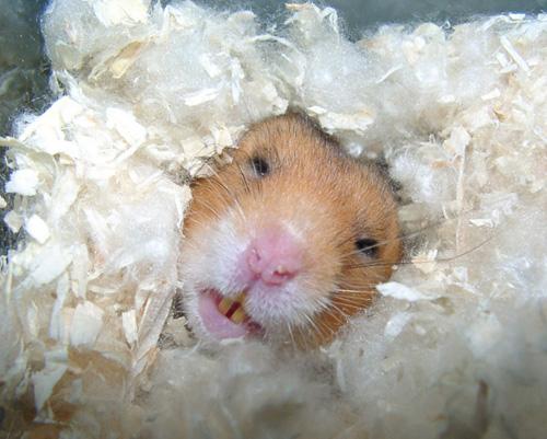 hamster spielzeug selbst machen wie viel kostet ein hamster im monat hamsterk fige aus holz. Black Bedroom Furniture Sets. Home Design Ideas